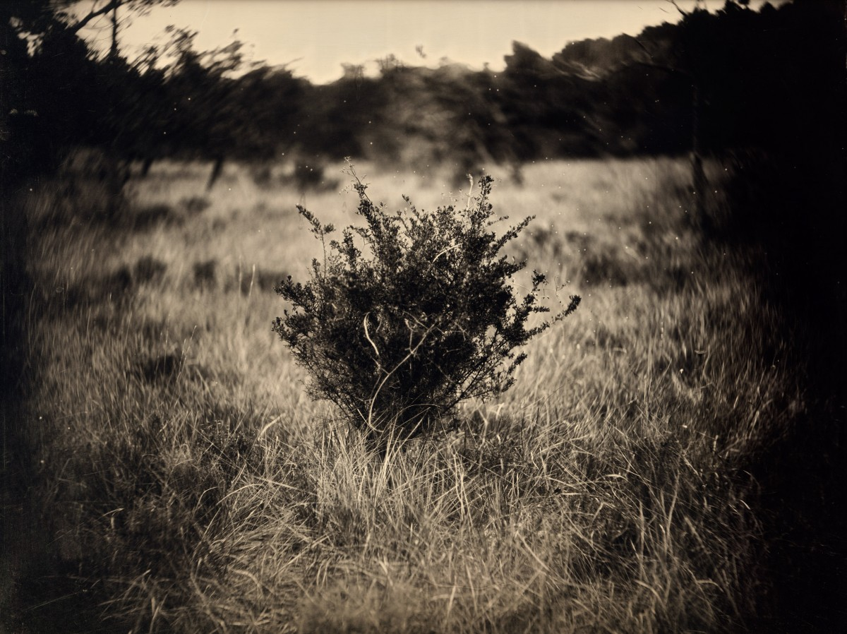 Éric Antoine photo Frénésie du Silence L'arbuste