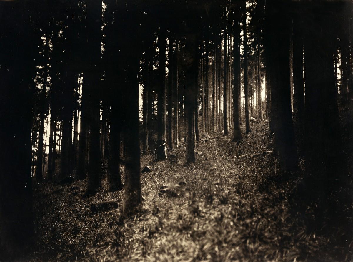 Éric Antoine photo Le Complexe de la Simplicité L'embrasseuse d'arbres